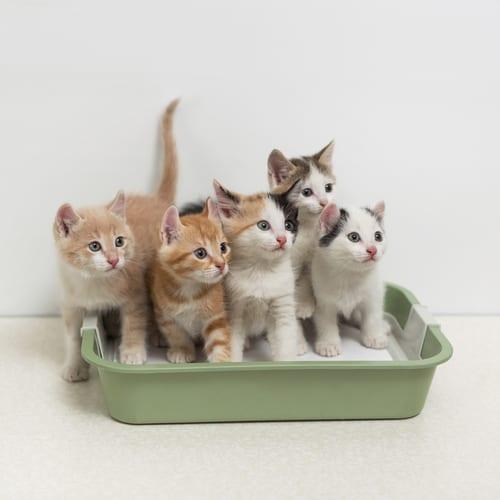Jak wychować kociaka? Zaspokoić jego potrzeby.