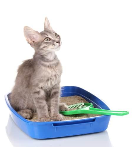 Kuweta dla kota - jak powinna być?
