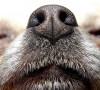 Wzorce strzyżenia psów rasowych FCI
