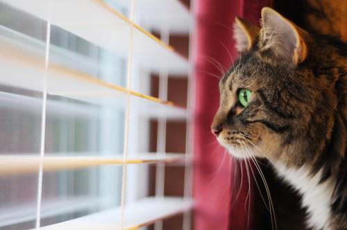 Kot sam w domu - fakty i mity