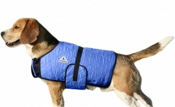 Zabezpieczyć psa przed upałem to obowiązek każdego opiekuna
