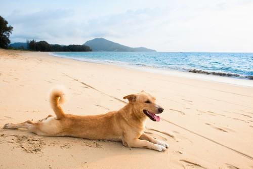 Jak przygotować psa na upalne lato?