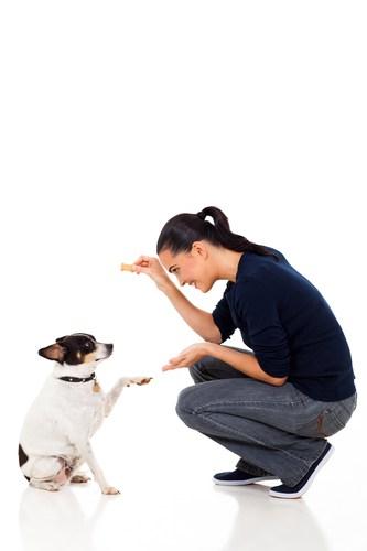 Czy każdego psa można wytresować? Można, tylko po co?