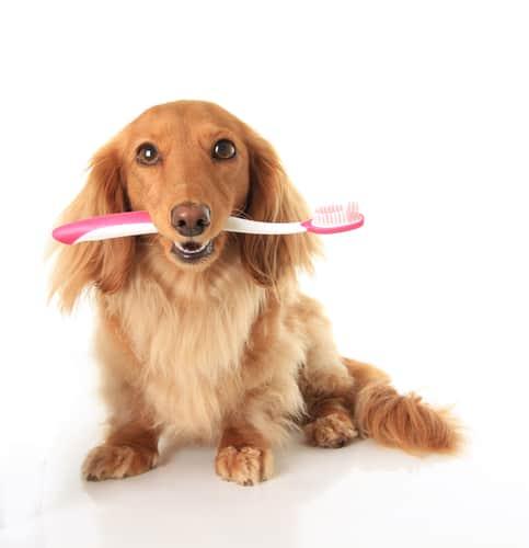 Po co czyścić zęby psom i kotom?