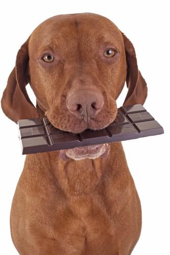 Co najbardziej szkodzi psom?