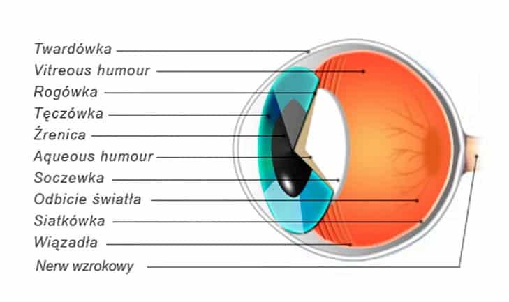 kotu ropieją oczy, oczy kota budowa oka