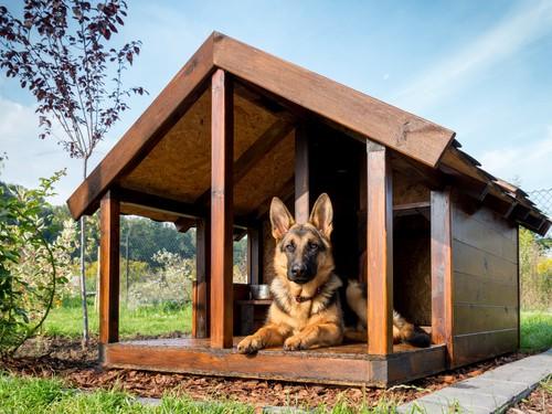 Zasady dobrostanu, naturalne potrzeby psa