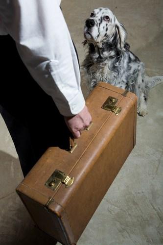 Rozstanie z psem to cała procedura