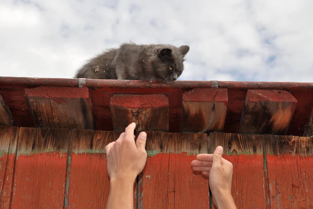 Przygarnąć dachowca to dac mu dom i spokój