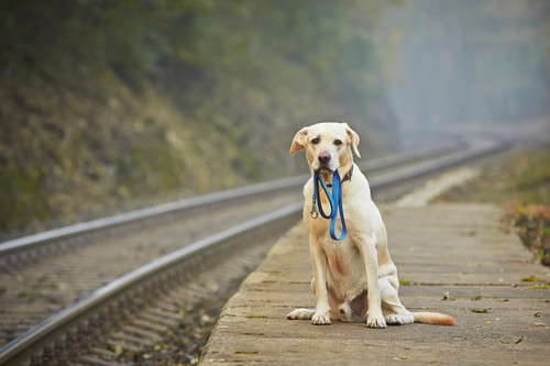 Rozstanie z psem jest trudniejsze dla psa niż jego Pana