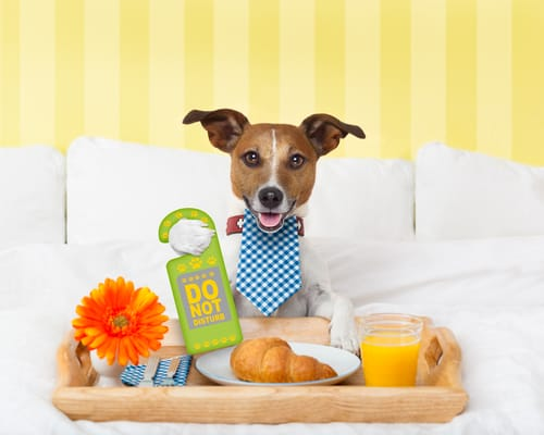 Hotel dla psów