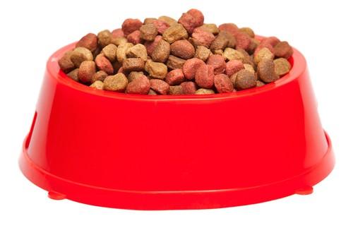 Czym karmić psy i koty