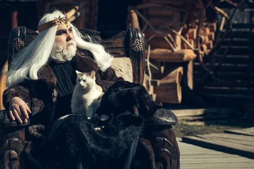 Socjalizacja kota z człowiekiem - jak to zrobić