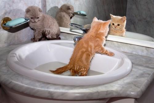 Najważniejsze etapy socjalizacji kota
