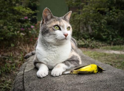 Natura kota jest dzika