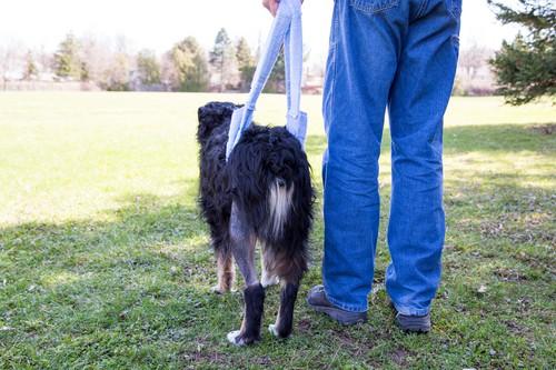 Zespół konskiego ogona dotyka stare psy.