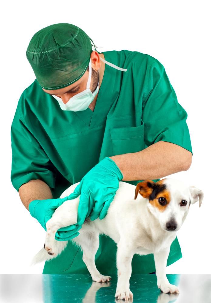 Zwyrodnienie stawu łokciowego może wystąpić u psa w każdym wieku