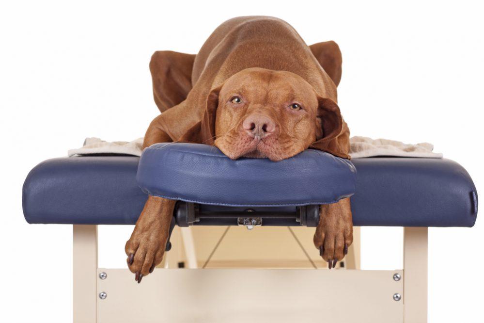 Rehabilitacja psów i kotów to bardzo szybko rozwijajaca się dziedzina weterynarii.