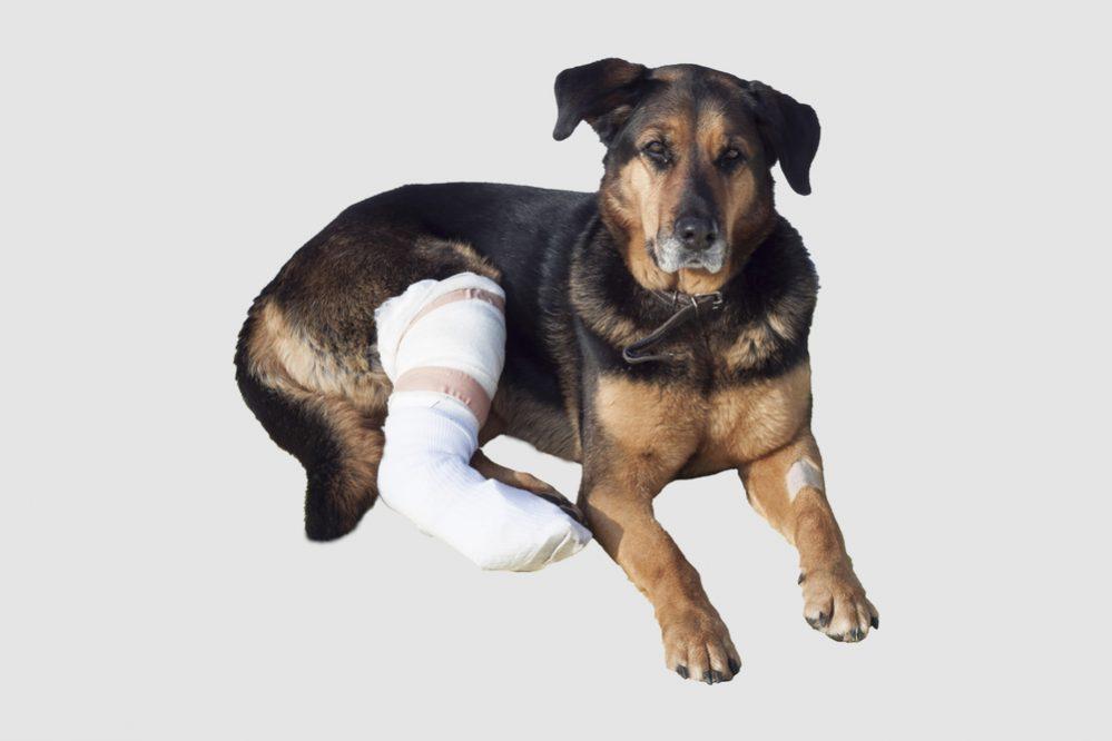 Rehabilitacja psów i kotów