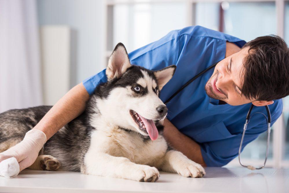 Kontrolne badania ortopedyczne szczeniąt