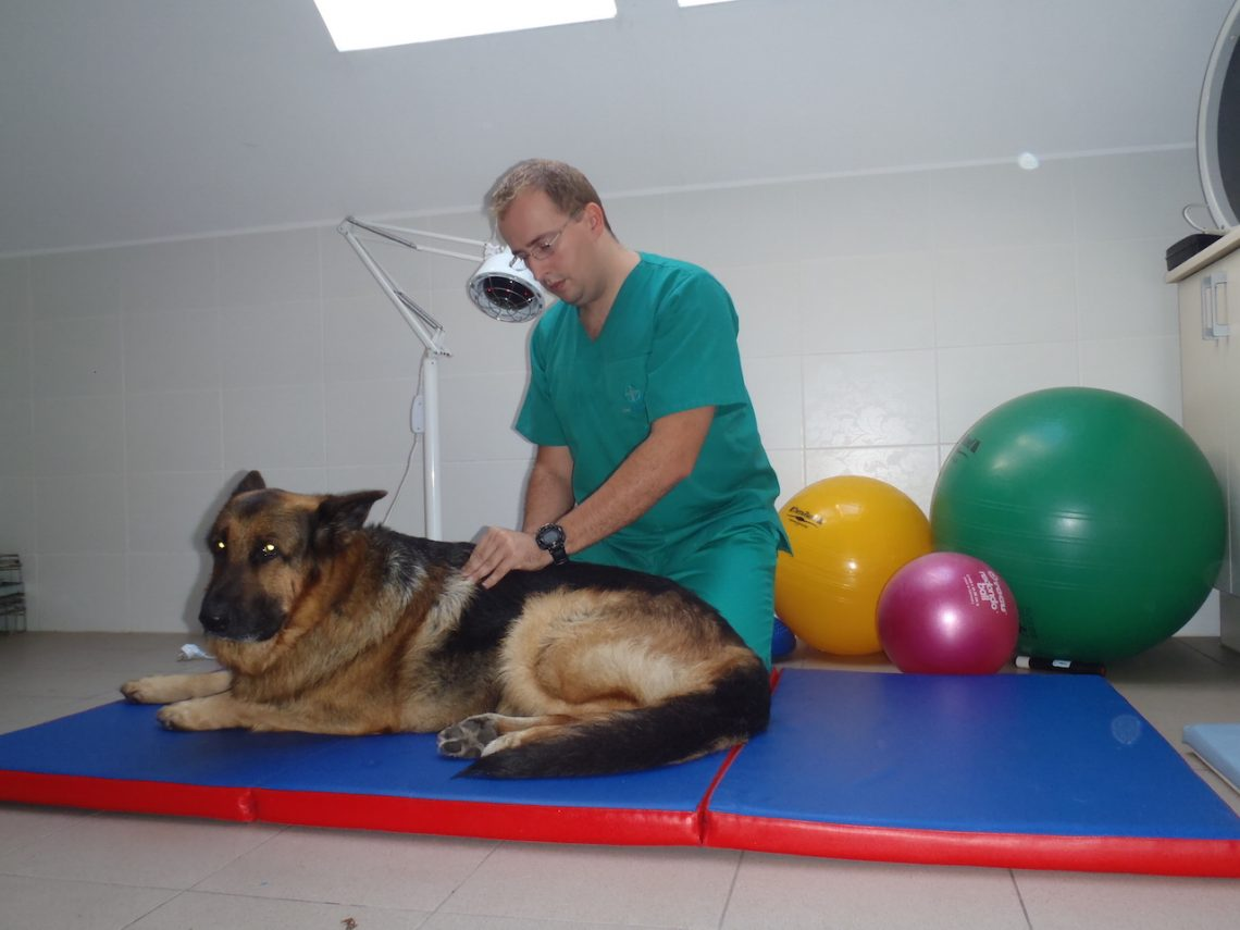 Adam Wróbel – zoofizjoterapeuta