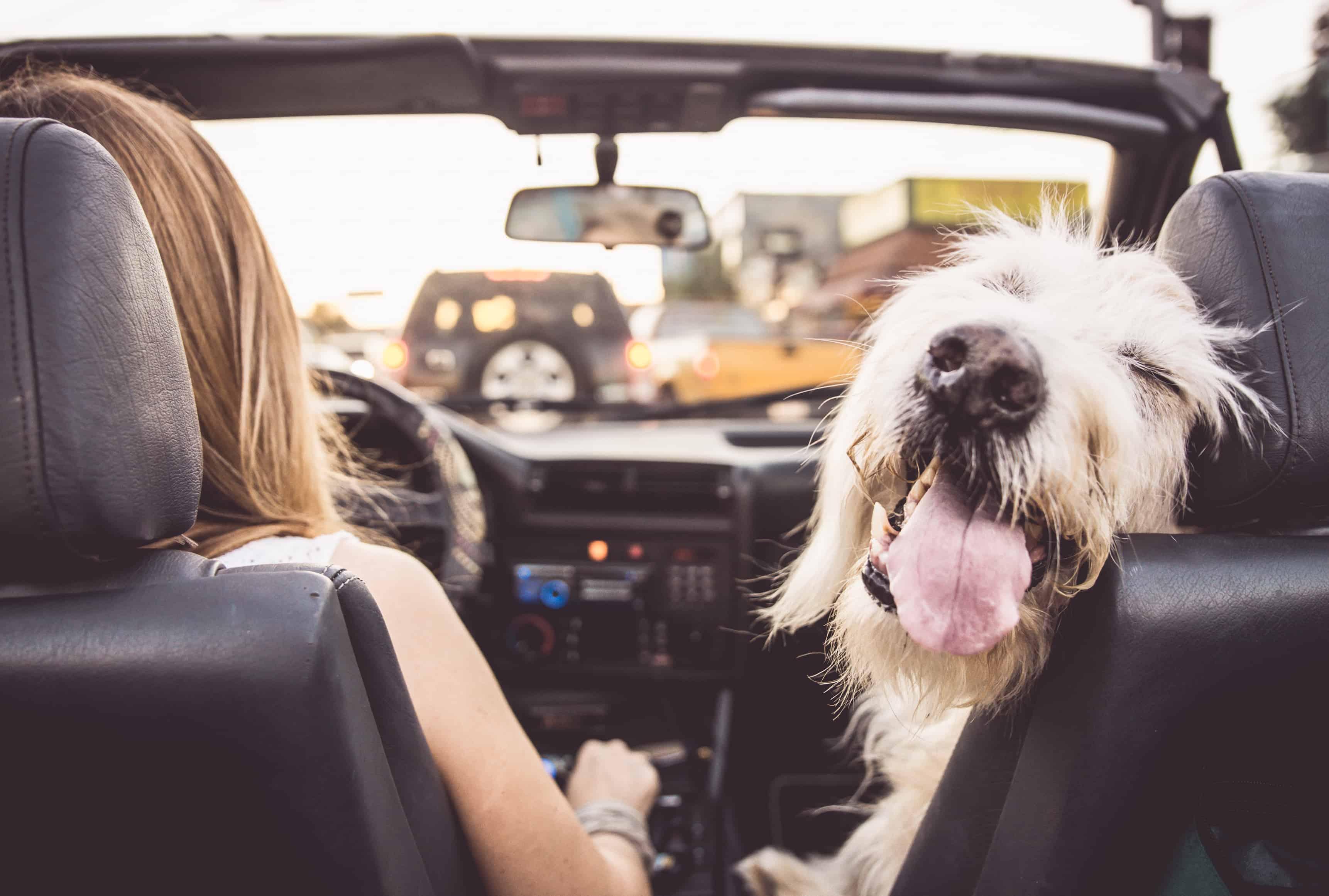Podróż samochodem z psem lub kotem