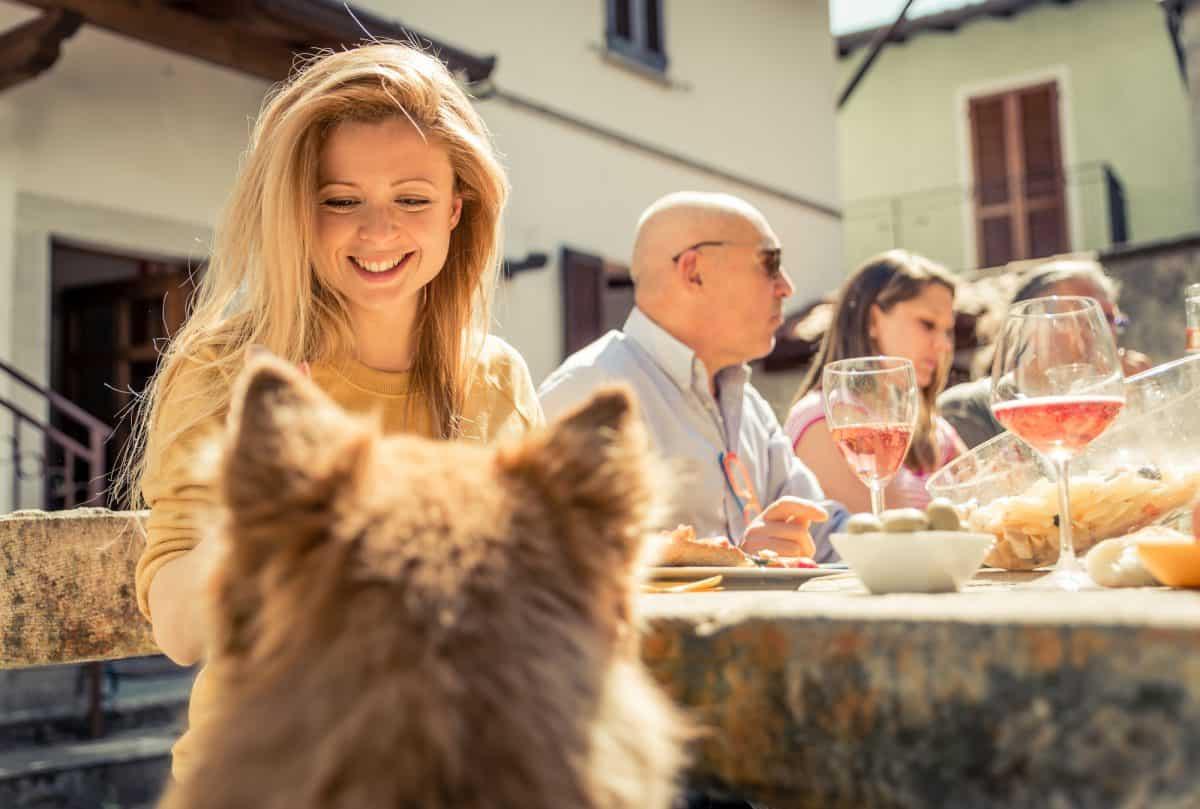 Pies żebrze przy stole - jak go tego oduczyć?