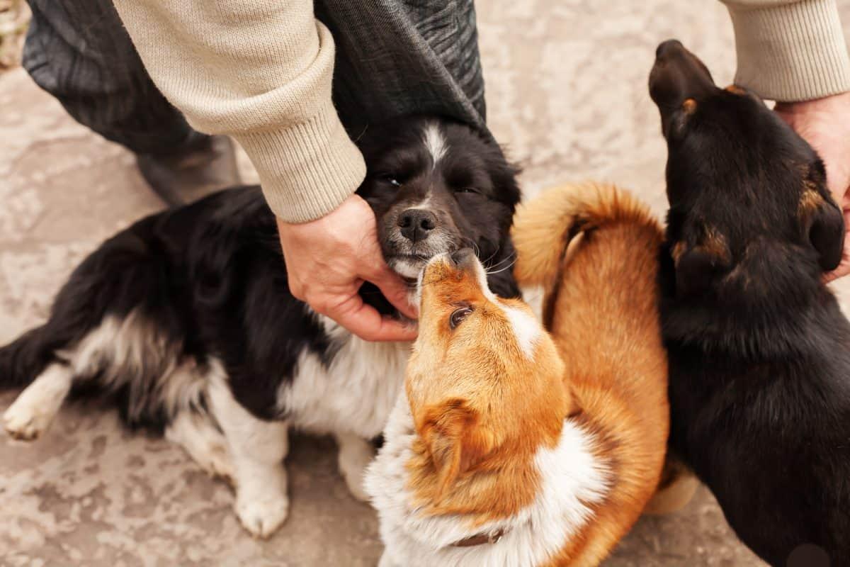 Przywitanie z psem - czego nie robić