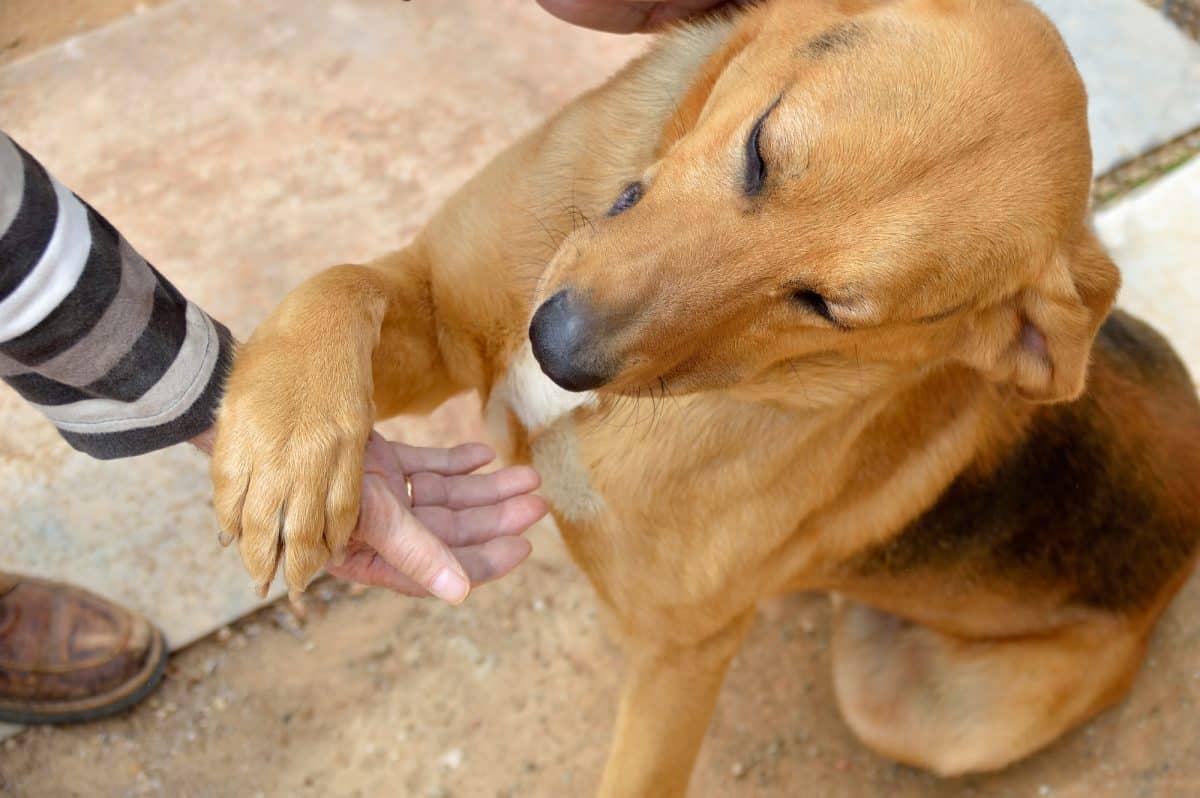 Przywitanie z psem musi być wyważone.