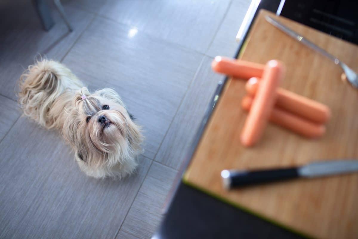 Pies żebrze przy stole - można go tego oduczyć.