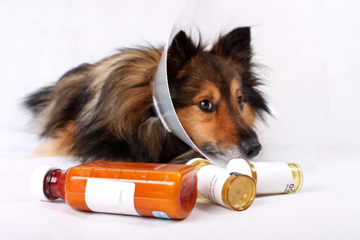 Ludzkie leki mogą być szkodliwe dla zwierzaków