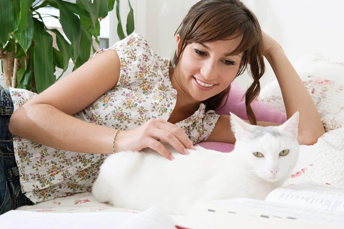 Gdzie drapać kota, żeby był zadowolony?