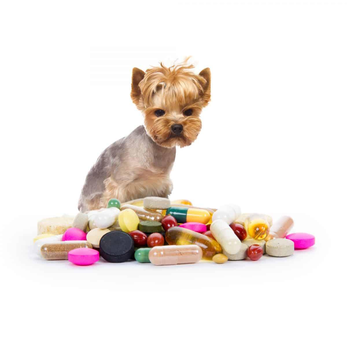 Ludzkie leki - można je podawać zwierzakom?