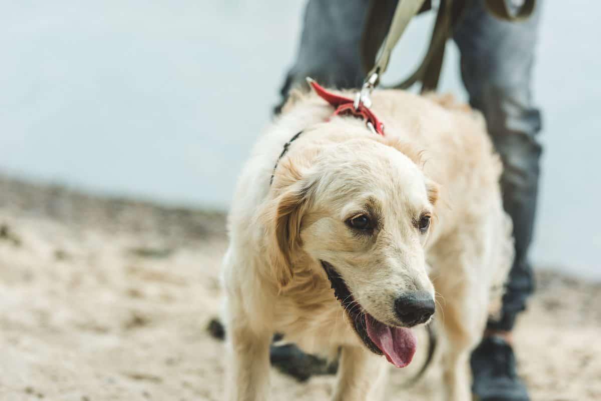 Emocje właściciela mają wpływ na zachowanie psa