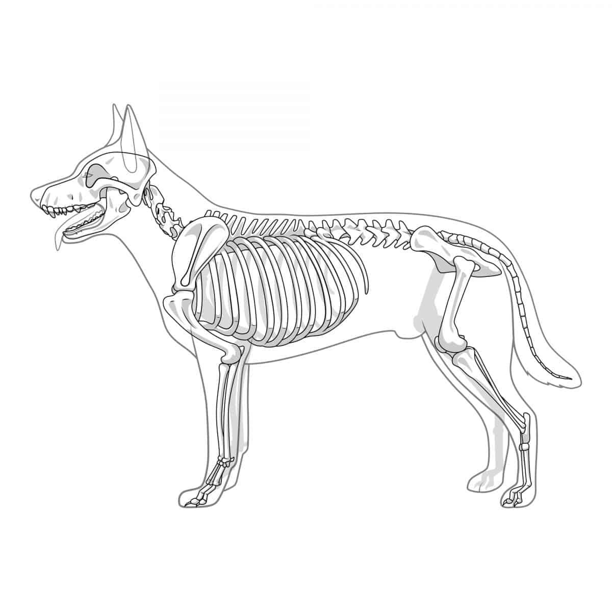 Zwyrodnienia kręgosłupa u psa