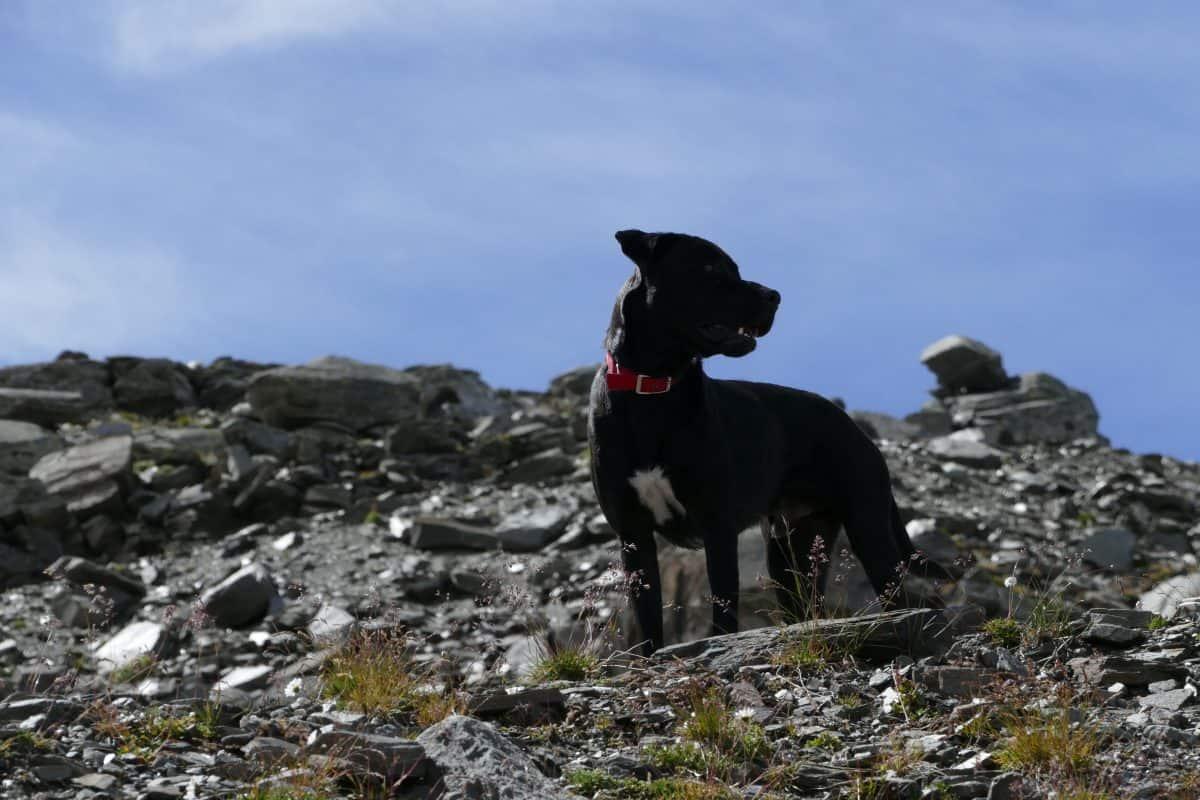 Bieganie z psem to frajda dla psa i dla człowieka