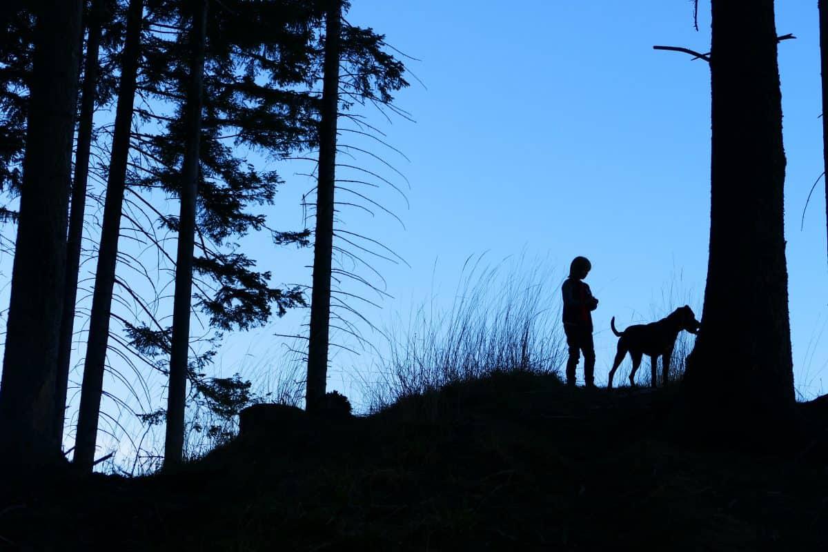 Pies biegnie przy nodze - jak go tego nauczyć?