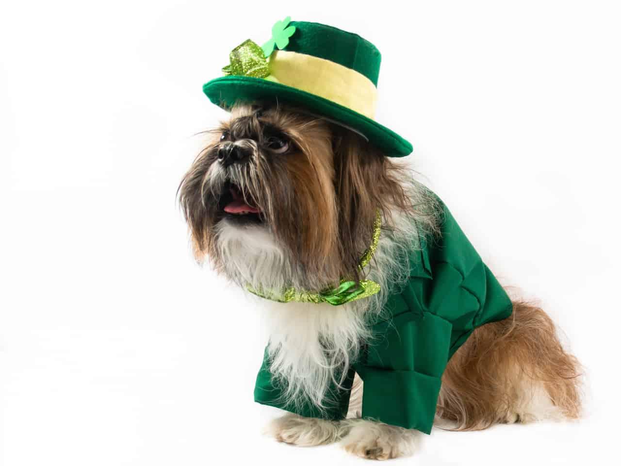 Ubranka dla psa - czy warto je kupować?