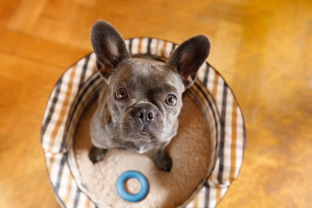 Zrozumieć psa - trudna sztuka?