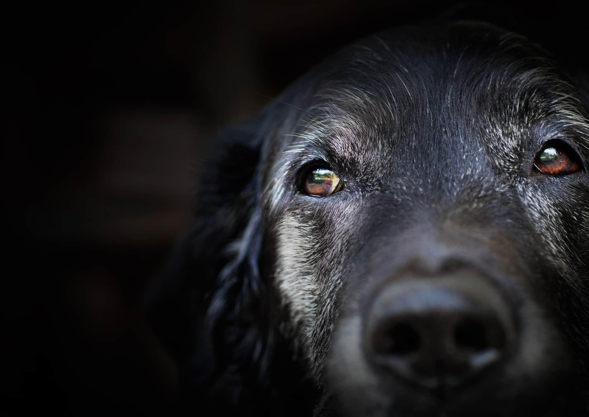 Pies senior, czyli psia starość
