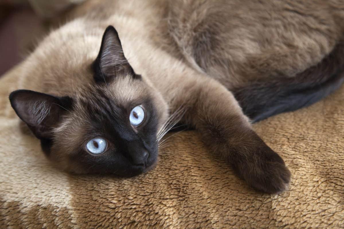 Czy koty są bardziej narażone na nowotwory?