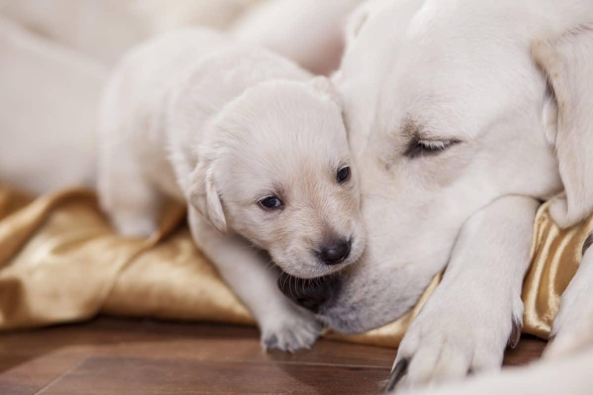 Zapobieganie zachwaniom agresywnym u psa