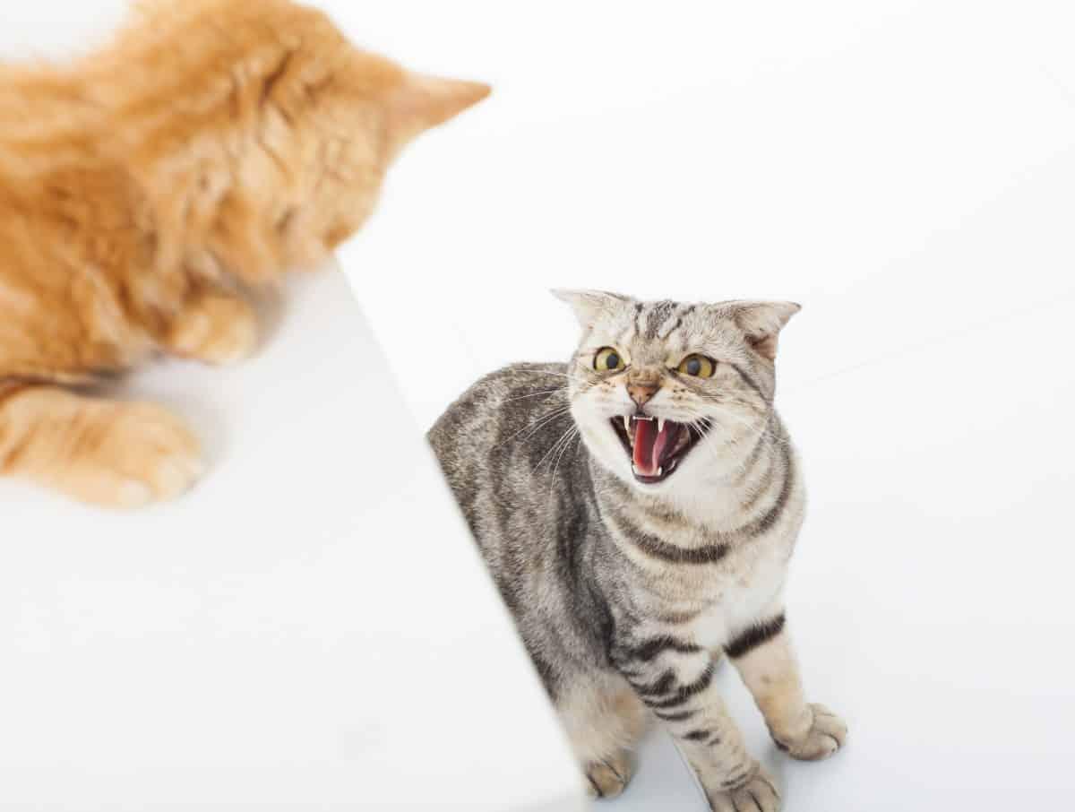 Konflikty między kotami