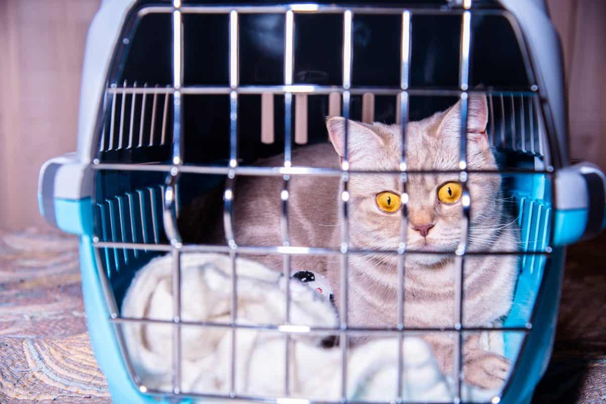Kot nie lubi zmian, ponieważ przywiązuje się do miejsca.