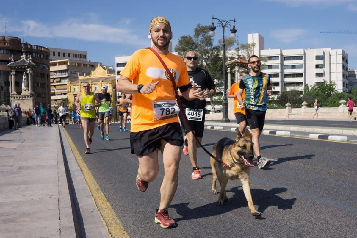 Maraton nie jest odpowiedni dla małego pieska, np. yorka.