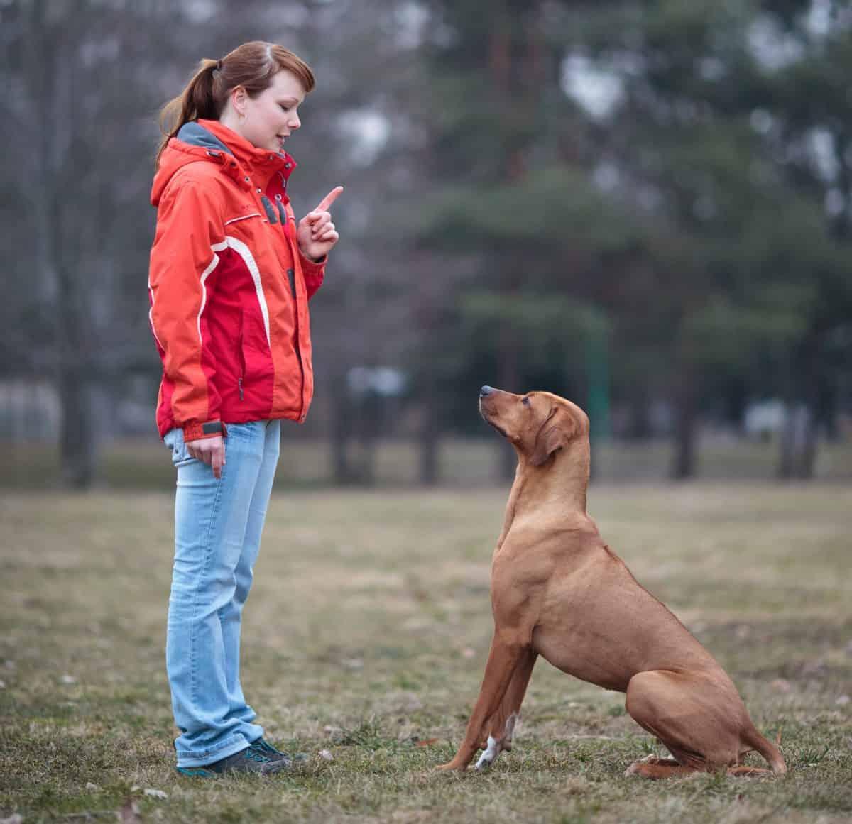 Pies ma problem z emocjami - trzeba go szkolić.