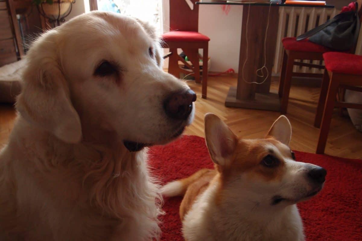 Suplementy sa niezbędne dla zdrowia psa.