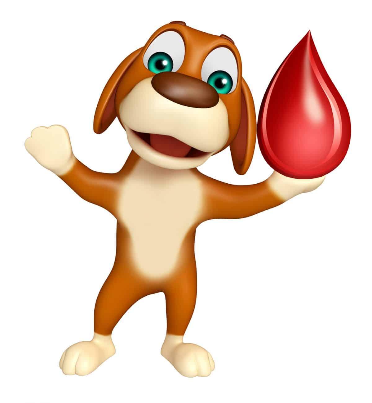 Jak przygotować zwierzę do oddania krwi?