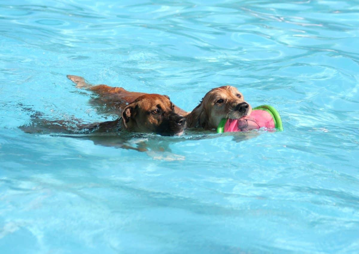 Pies sportowiec wymaga specjalnej opieki.