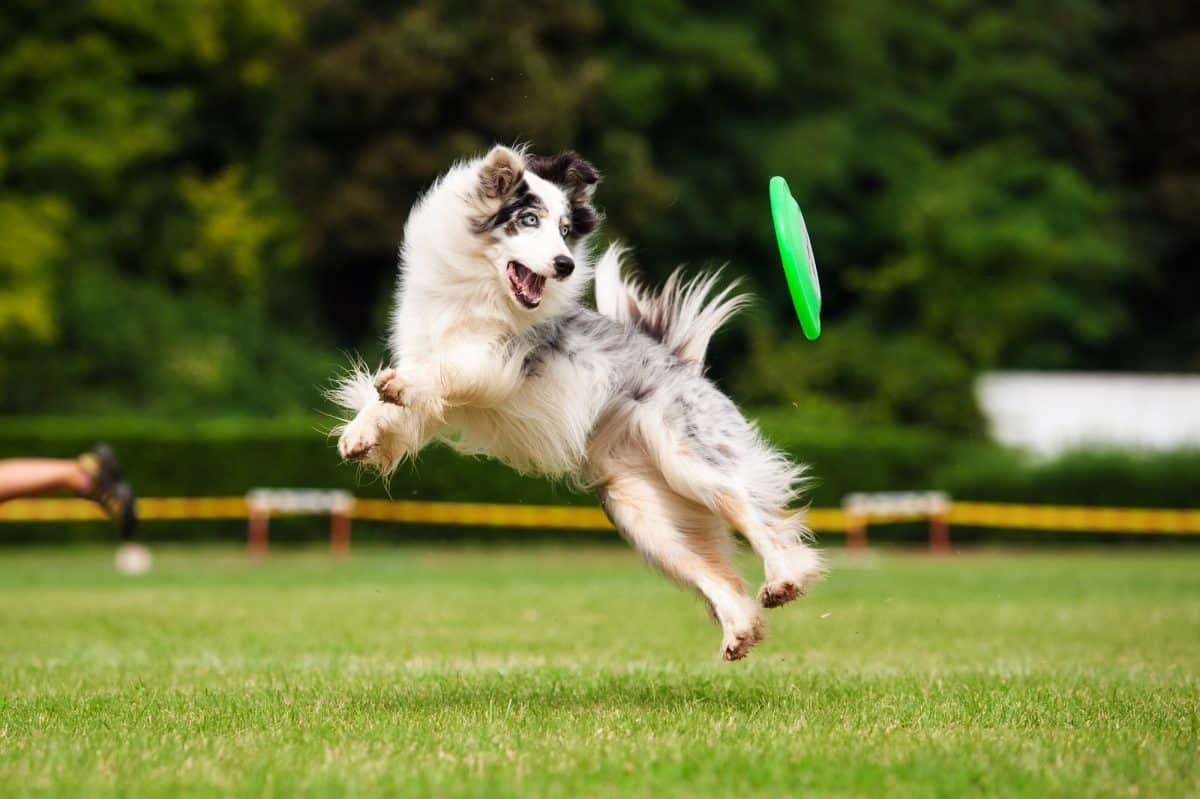 Pies sportowiec - jak o niego dbać?